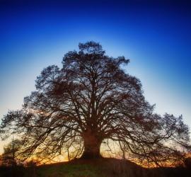 tree-3124103_960_720